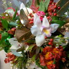 Flower arrangement titled Orchid Christmas