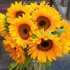 Flower arrangement titled Simply Sunflowers