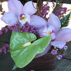 Flower arrangement titled Orchids Forever